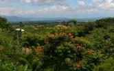 KOLUMBIA – AMAZONIA- CANO CRISTALES – PARK TAYRONA