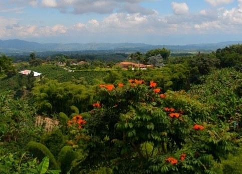 KOLUMBIA – BOGOTA, REGION KAWY, CANO CRISTALES (kolorowa rzeka) – CARTAGENA